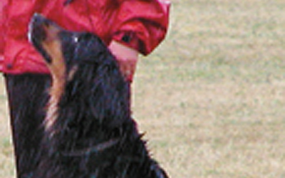 SM 2009